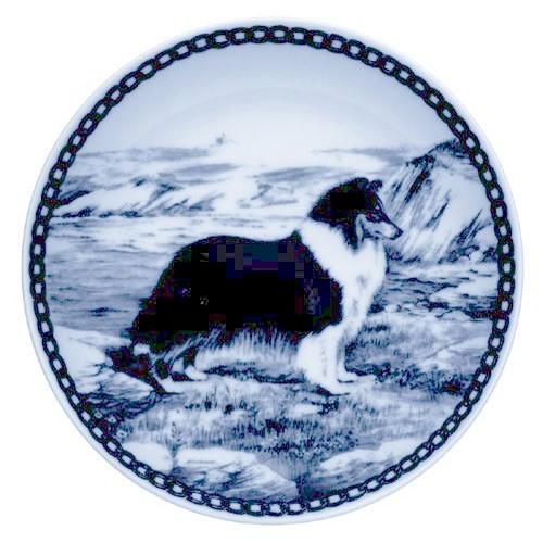 Shetland Sheepdog dbp07205