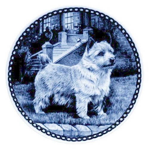 Norwich Terrier dbp07220