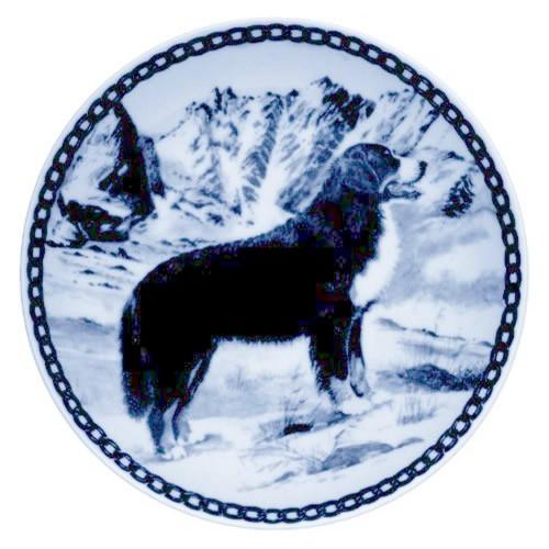 Bernese Mountain Dog dbp07226