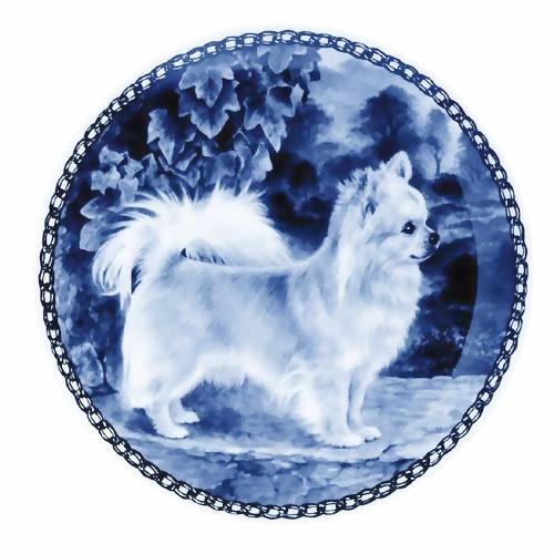 Chihuahua - Long Coat dbp07262
