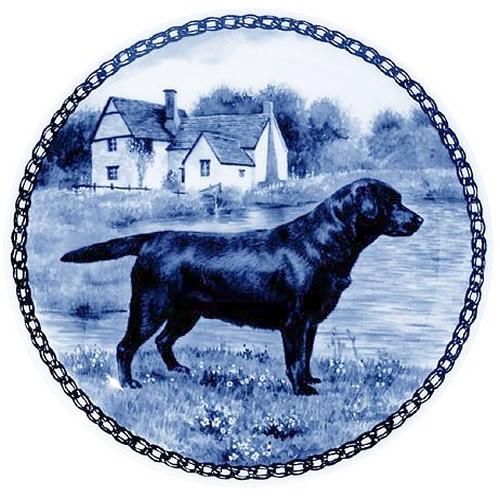 Labrador Retriever dbp07303