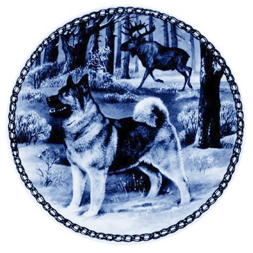 Norwegian Elkhound dbp07319
