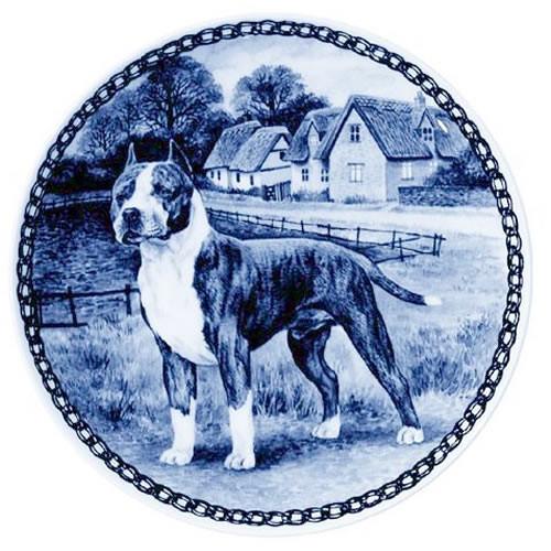 American Staffordshire Terrier dbp07327