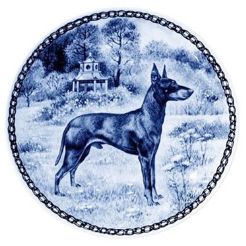 Manchester Terrier dbp07345