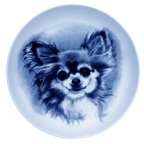 Chihuahua - Long Coat dbp07511