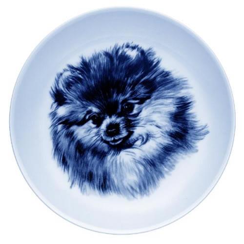 Pomeranian dbp07537