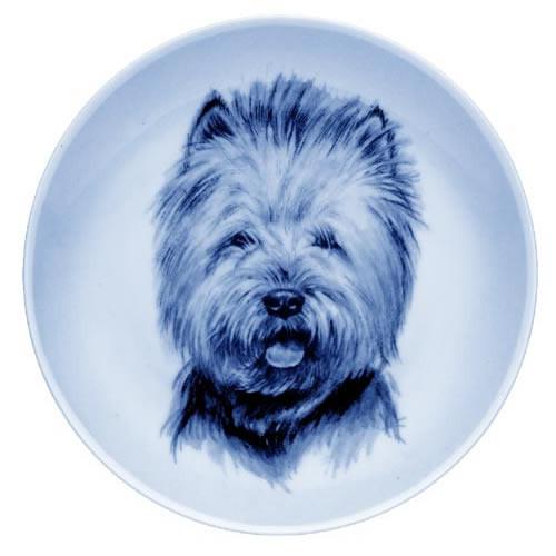 West Highland White Terrier dbp07539