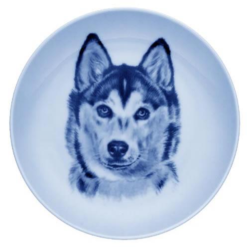 Siberian Husky dbp07545