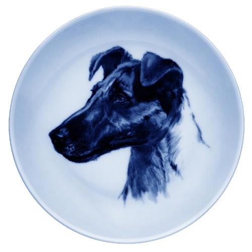 Smooth Fox Terrier dbp07548