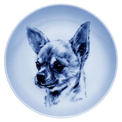 Chihuahua - Smooth Coat dbp07549