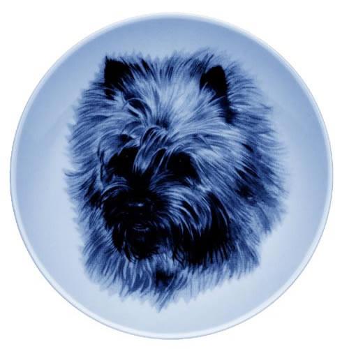 Cairn Terrier dbp07550