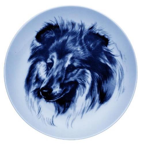 Shetland Sheepdog dbp07554