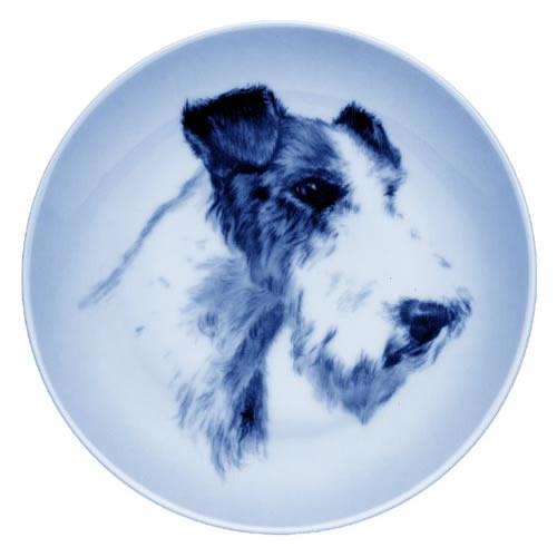 Wire Fox Terrier dbp07555