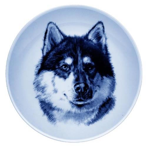 Canadian Eskimo Dog dbp07562