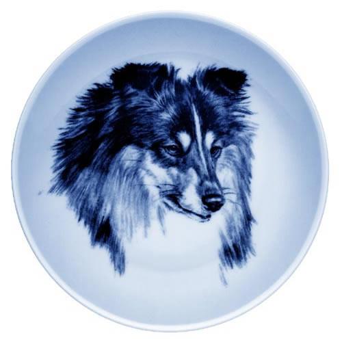Shetland Sheepdog dbp07565