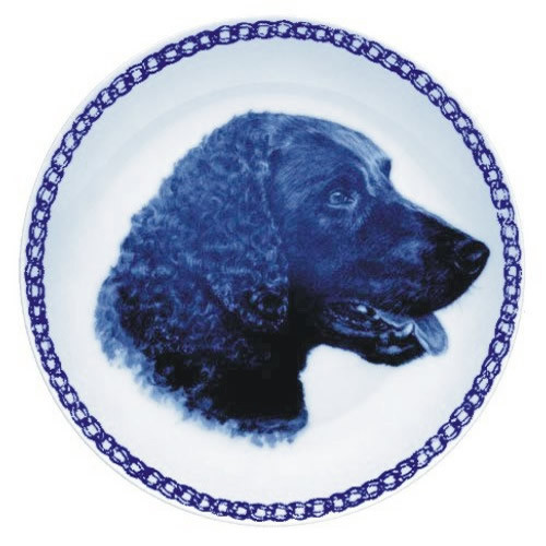 Curly-Coated Retriever dbp07584