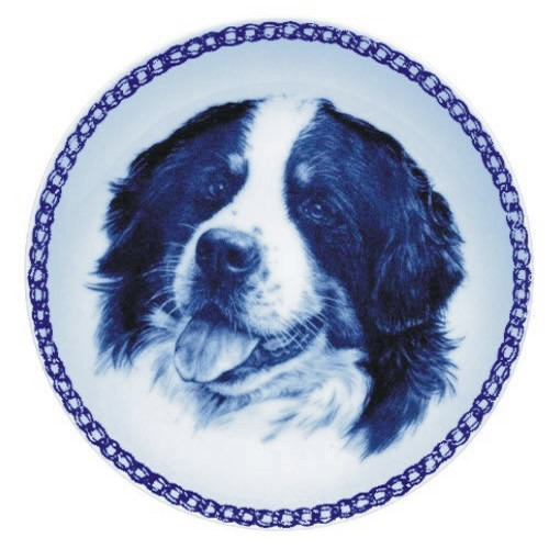 Bernese Mountain Dog dbp07592