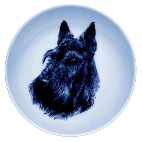 Scottish Terrier dbp75611