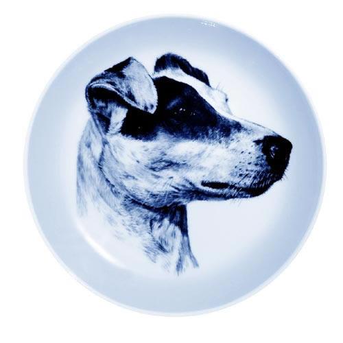 Jack Russell Terrier dbp75624