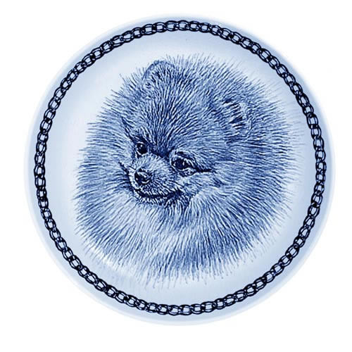Pomeranian dbp75649