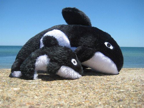 Ollie the Orca with  Squeaker