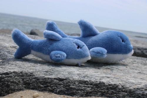 Sonny the Shark w/ squeaker
