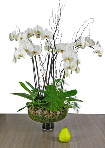 Large Double Phalaenopsis Orchid Planter
