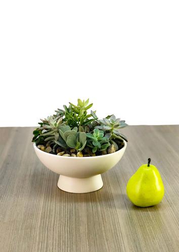 Ceramic Compote Succulent Garden