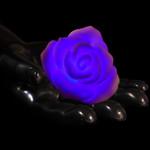 """3"""" Multicolor LED Floating Rose (4 Pack)"""