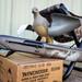 Benelli SBE III 12 GA in Gore Tungsten Optifade Shotgun Package