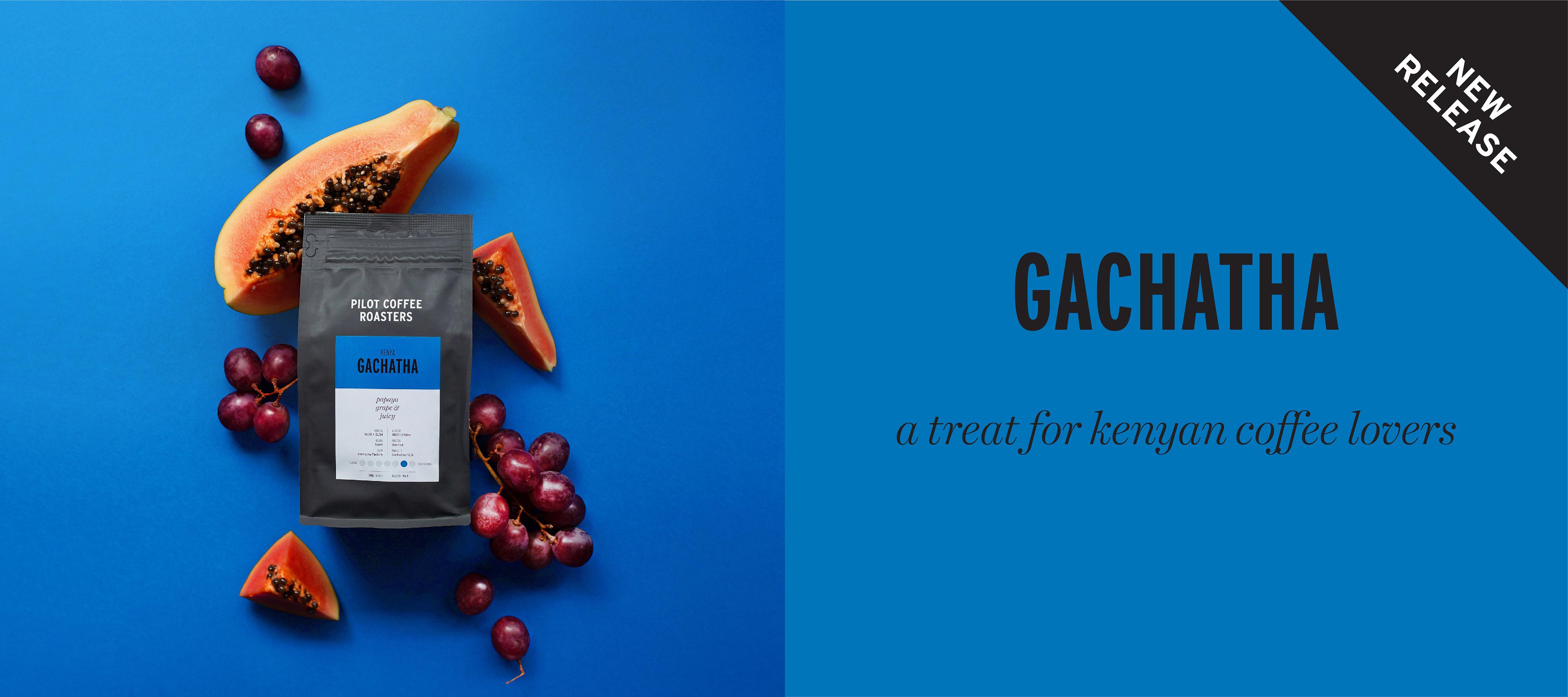 A treat for Kenyan coffee Lovers, Gachatha