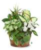 Dish Garden-5 assorted plants