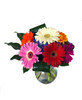 Flowers that Smile- Gerbera Daisies