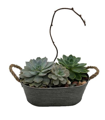 Mixed Succulent Planter