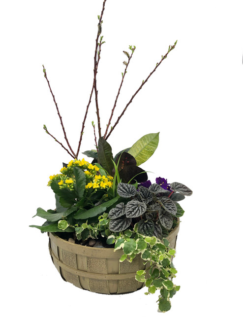 Large Dish Garden Planter