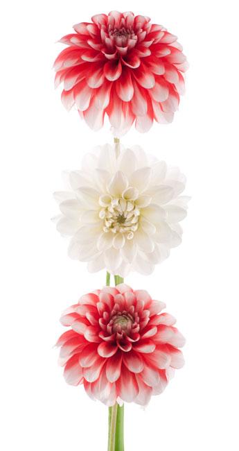 just-roses-deivery-areasl.jpg