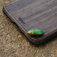 Toast wood iPhone SE (2nd gen) cover in ebony with amazing beetle.