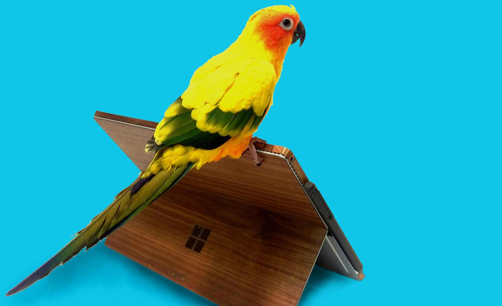 surface-with-parrot-blue-bg-banner-2.jpg