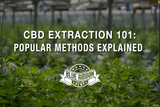 CBD Extraction 101: Popular Methods Explained