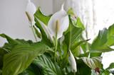 4 Tips For Summer Flower Care