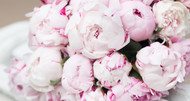 How to Plant and Grow Peonies
