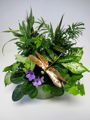 Copper Dragonfly Plant Garden