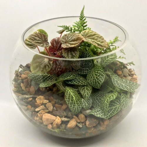 ***NEW*** Glass terrarium in an 8inch Bubble Bowl. perfect for any room!