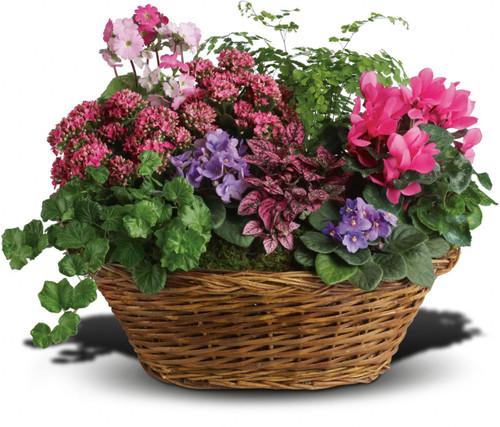 Marvelous Mix Tropical Plant Basket
