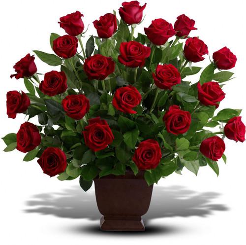 2 Dozen Red Rose Tribute