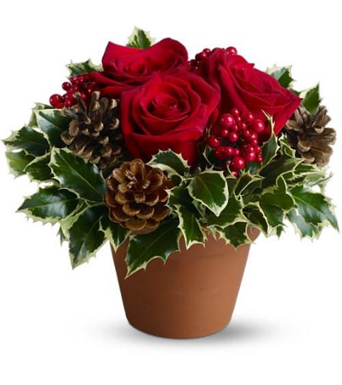 Country terra cotta pot with red roses, natural pine cones and variegated holly delivered locally by Chappell's Florist 1437 Williston Rd., South Burlington Vt. 05403