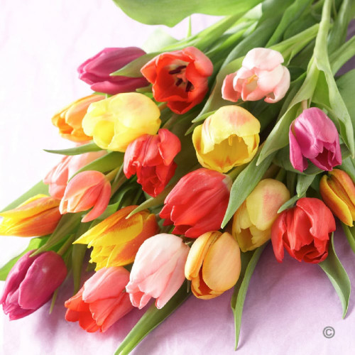 * SPECIAL * $34.99 Tulips Wrapped-20 Stems  reg $39.99 (Local Delivery Only)