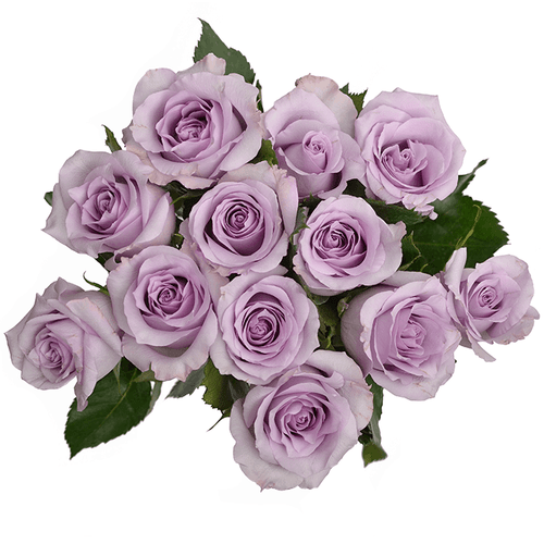 Dozen Purple Roses Wrapped