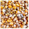 Popcorn - 10 lbs.