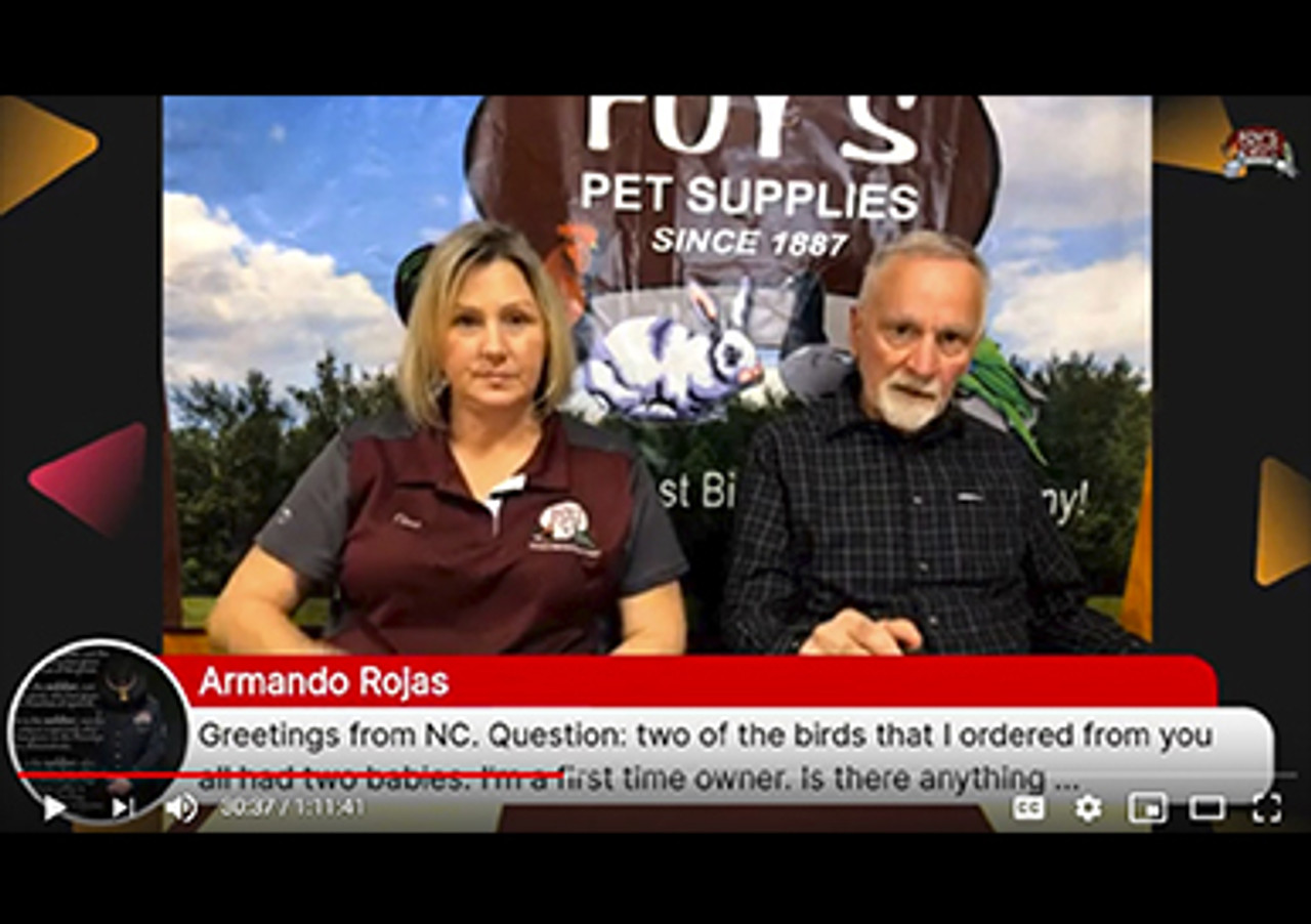 Foy's Facebook Live - Black Friday Specials and All Kinds of Tips and Tricks (November 26, 2019)